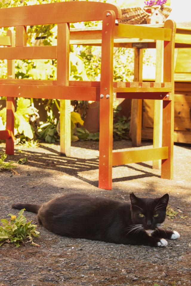 Katze auf dem Hof