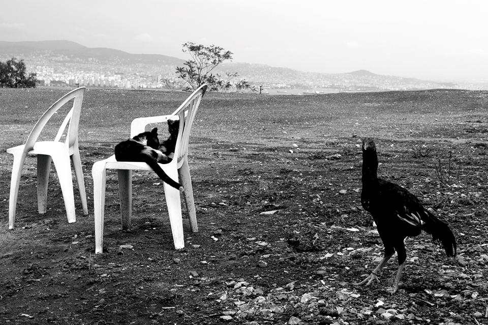 Katzen und Huhn in Istanbul