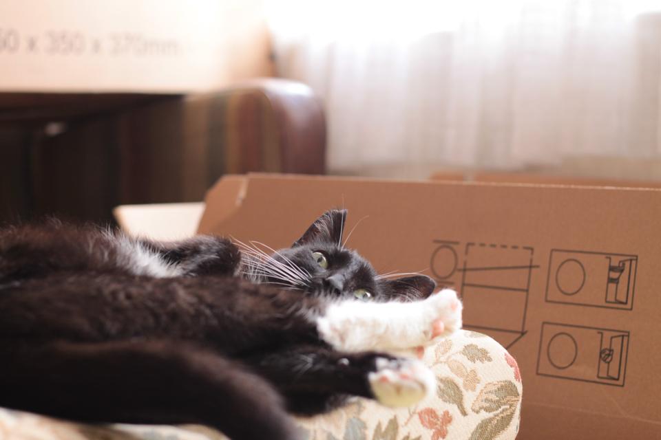 Katze auf dem Hocker