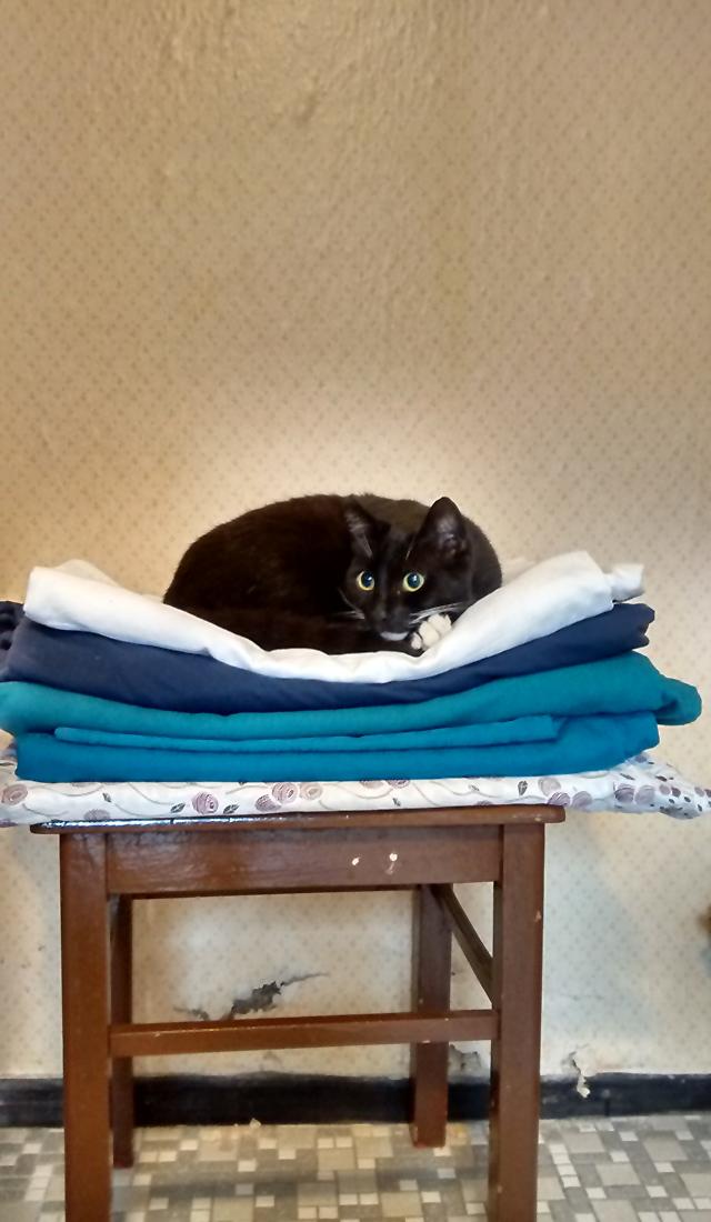Katze auf Wäschestapel