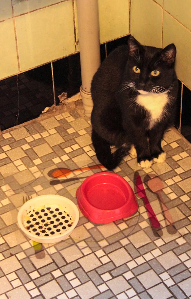 Katze vor leerem Futternapf
