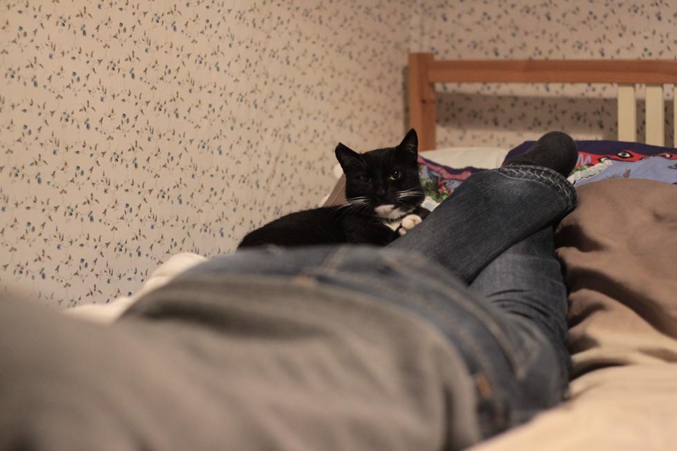 Katze auf Jans Bein
