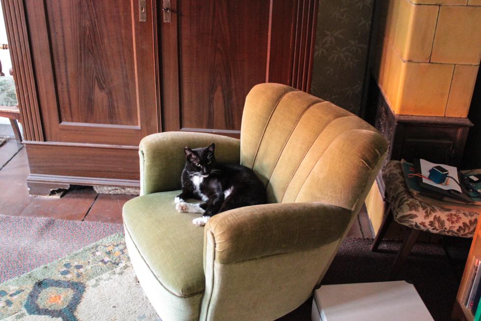 Piri auf einem Sessel
