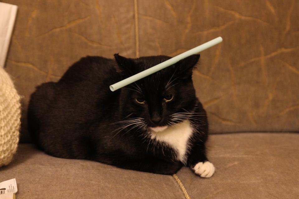 Katze mit Strohhalm auf dem Kopf