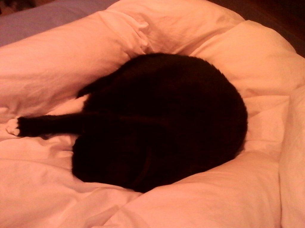 Auf einer pinken Decke liegt die Katze eingerollt und schläft.
