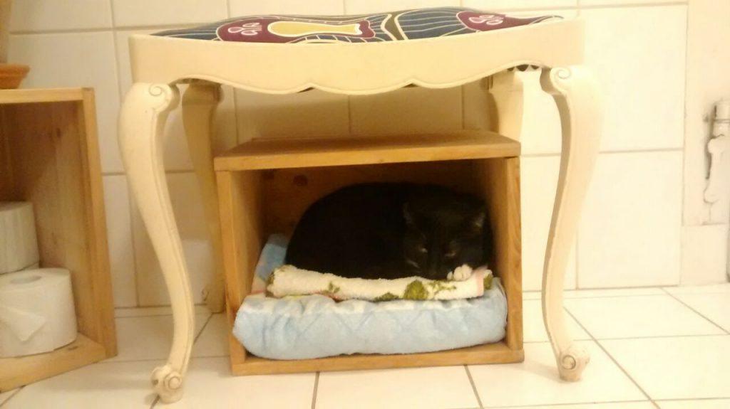 In einer Holzbox, genutzt als Handtuchregal, liegt die Katze auf 2 Handtüchern.
