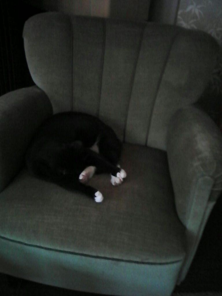 Ein dunkelgrüner Sessel, mittlerweile Piris Sessel, mit Piri, die schläft. 3 ihrer Pfoten von sich gestreckt, die vierte, einer ihrer hinteren, dient als Kopfkissen.