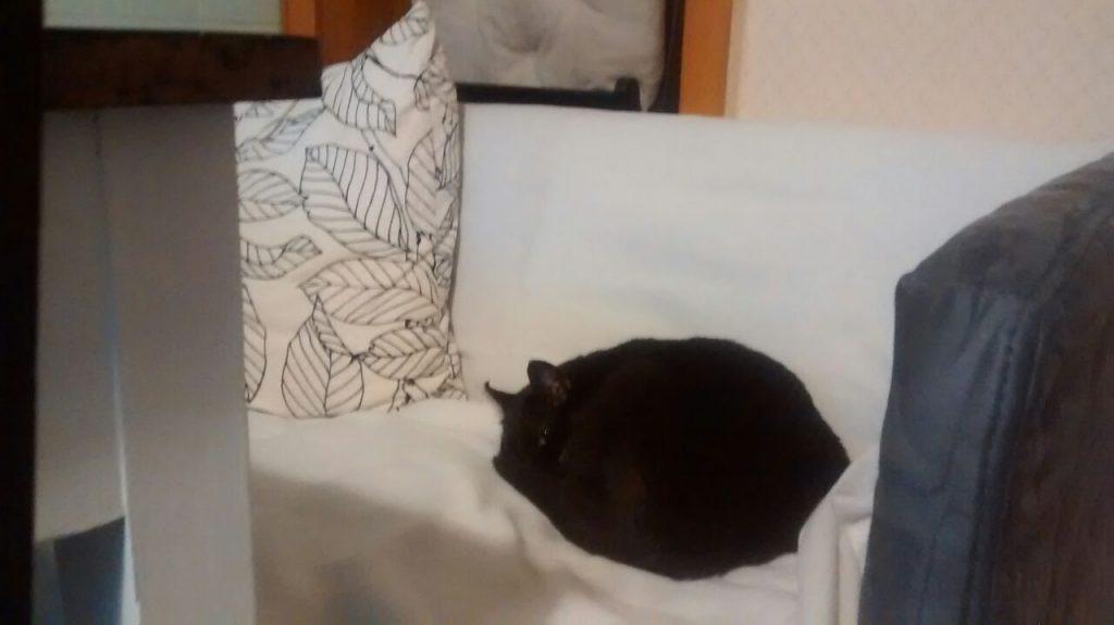 Auf einem Sofa, das von einer weißen Decke bedeckt ist. Darauf liegt die eingerollte Katze, von deren Kopf man hauptsächlich die Ohren sieht.