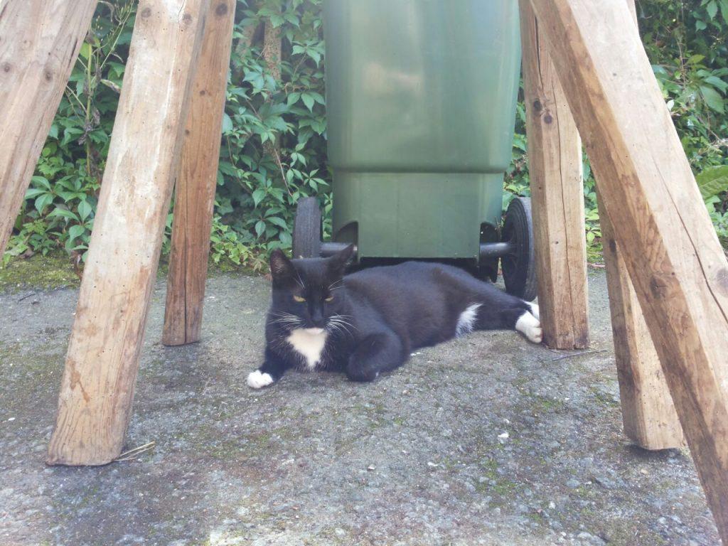 Vor einer grünen Mülltonne und unter einem Sägebock liegt die Katze ausgestreckt und sonnt sich.