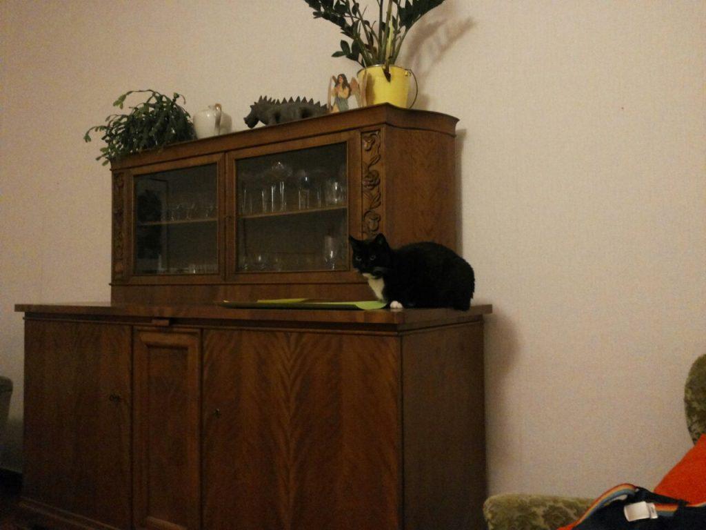Die Anrichte bzw der Schrank im Wohnzimmer. Piri sitzt auf dem Schrank, neben dem Aufsatz, in dem sich hinter Glastüren Geschirr befindet.