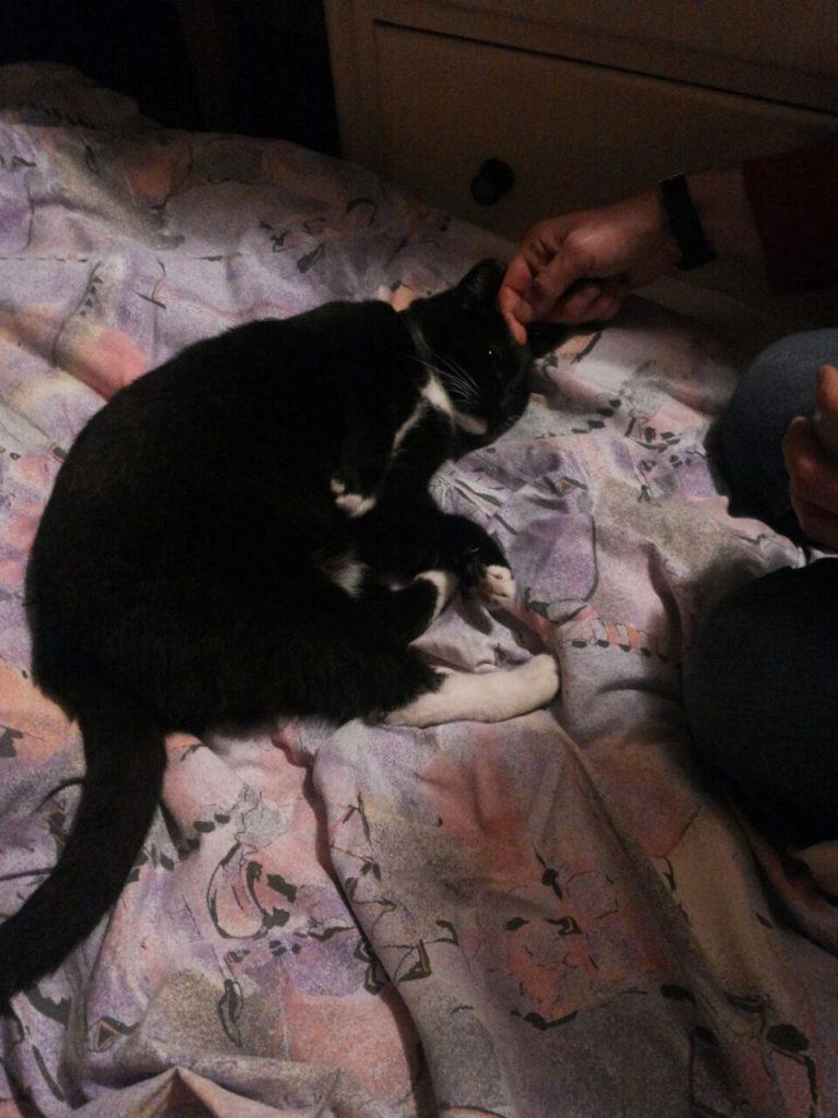 Auf einer lila gemusterten Decke liegt die Katze auf der Seite, neben ihr kniet eine Person, die die Katze am Kopf streichelt.