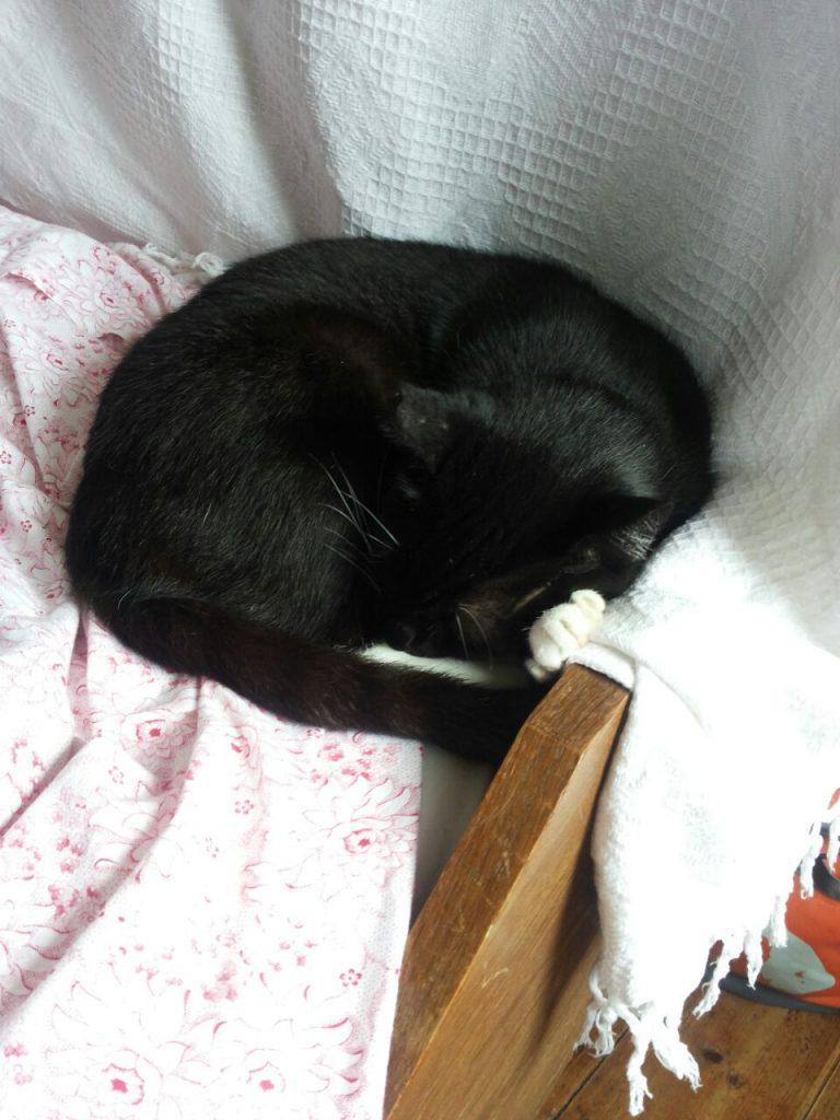 Von hellen Decken umgeben liegt die Katze eingerollt am Fußende des Bettes.