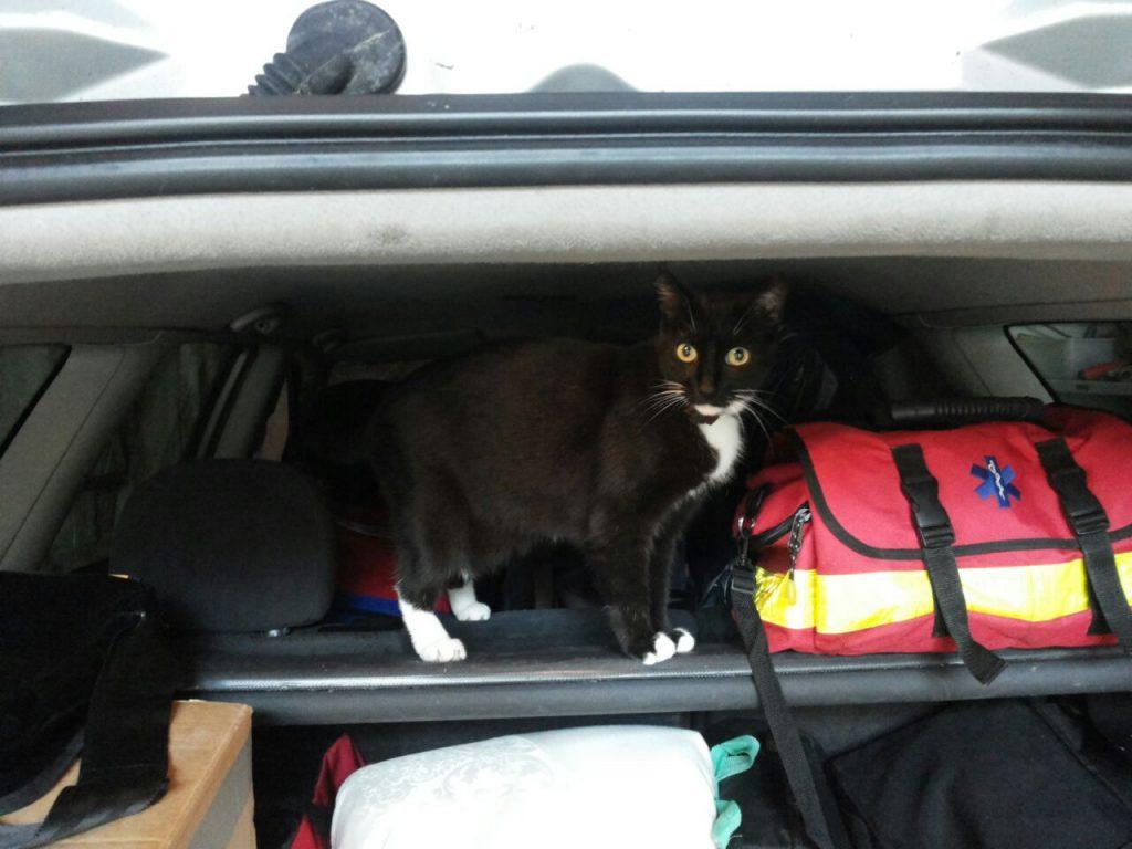 Ein aufgeklappter Kofferraum eines Autos. Auf der Rückenlehne des Rüc´ksitzes befindet sich eine Rettungstasche, danaben steht die Katze und guckt aufmerksam in die Kamera.