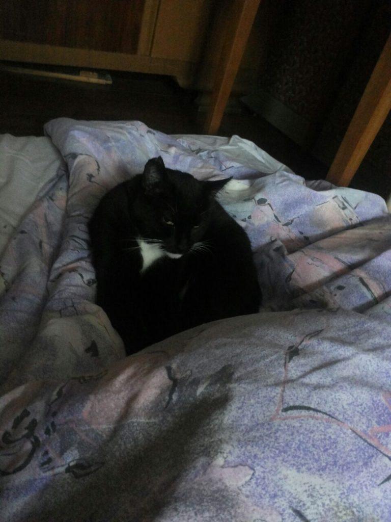 Die Katze liegt eingerollt auf einer Bettdecke und hat die Augen halb geschlossen.