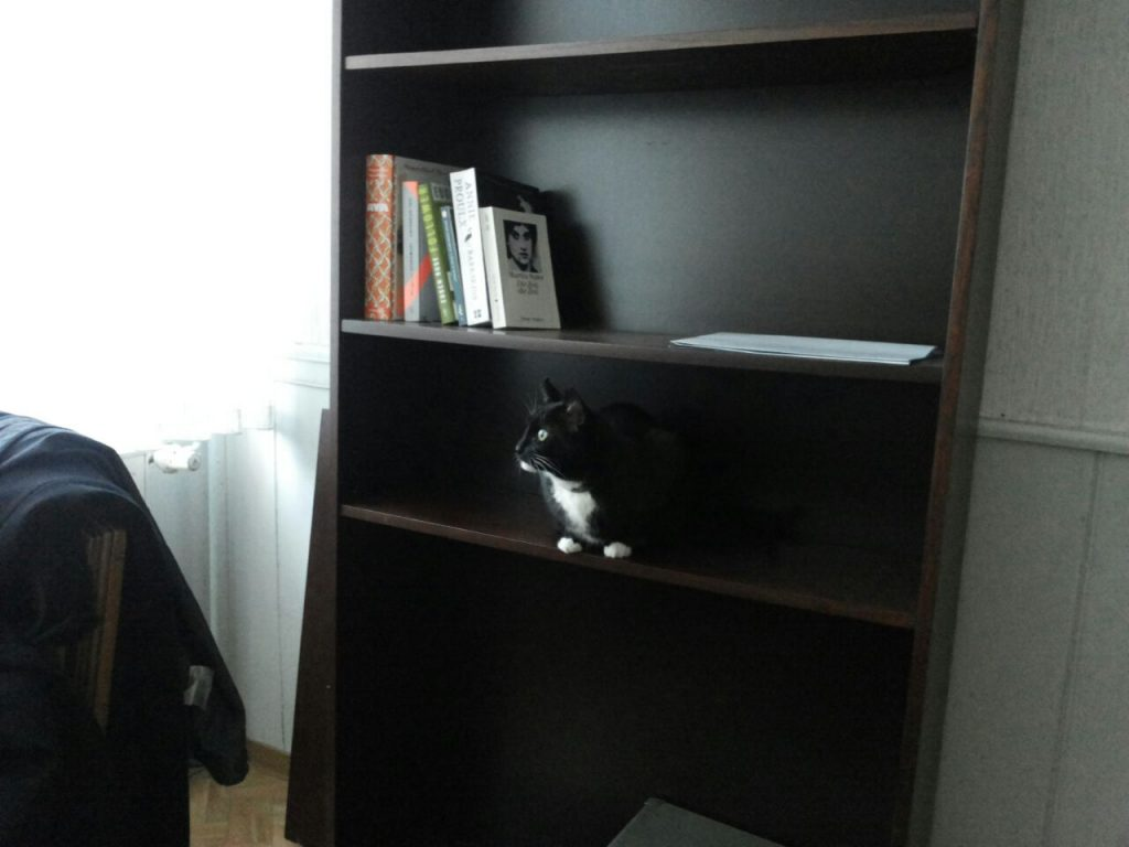 Dunkelbraunes Bücherregal mit ein paar Büchern, auf dem Regalboden darunter sitzt die Katze und schaut nach links, in Richtung eines Fensters