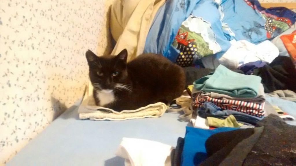 Umgeben von Wäsche auf dem Bett liegt die Katze.