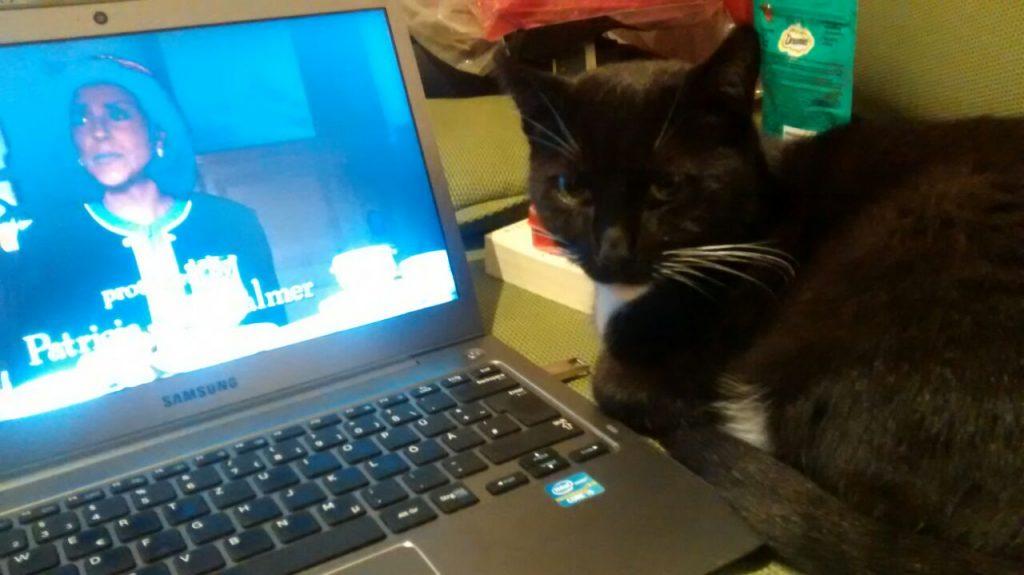 """Die Katze liegt neben eine Laptop und sieht in die Kamera. Auf dem Laptop ist ein Standbild der Serie """"Gilmore Girls""""."""