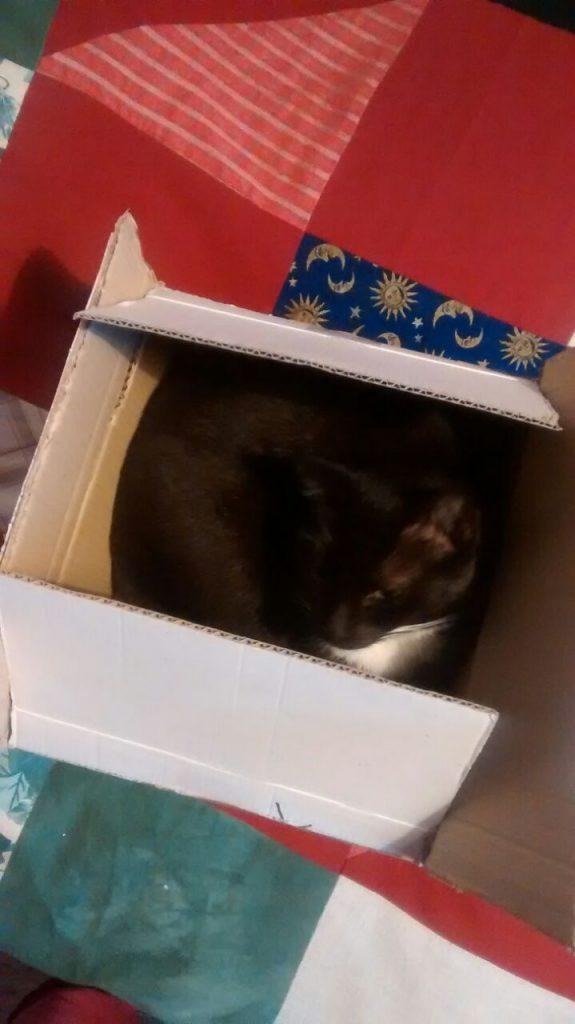 Auf einer Patchwork Decke steht ein quadratförmiger Karton, die Katze befindet sich darin und schaut zufrieden.