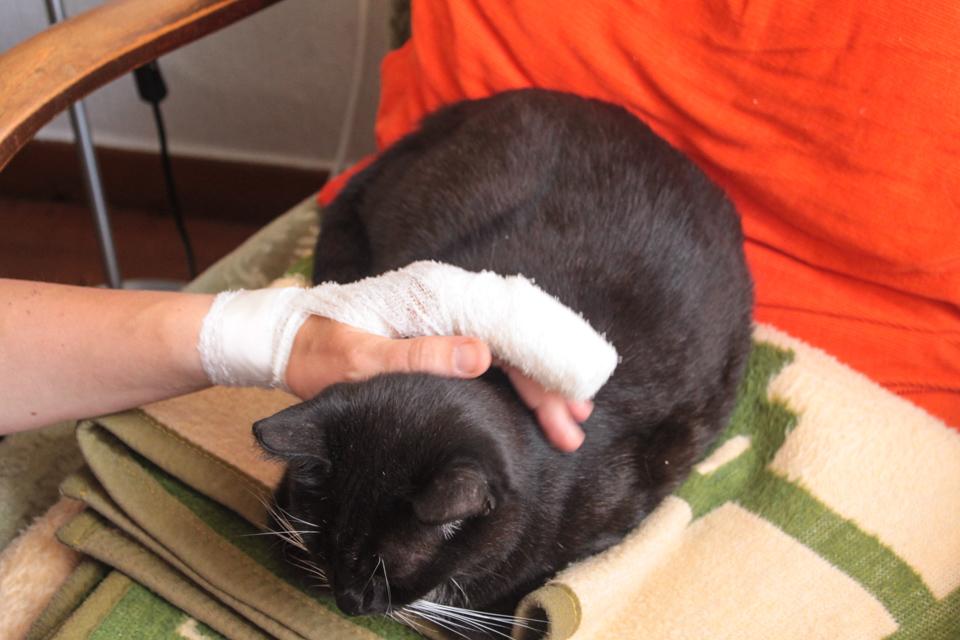 Die Katze liegt auf einer zusammengelegten Decke, Kerstins Hand, mit Verband um den Zeigefinger herum, streichelt sie.