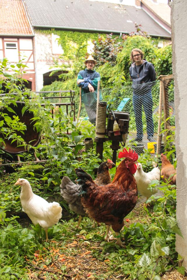 Die Hühner sind zum ersten Mal draußen