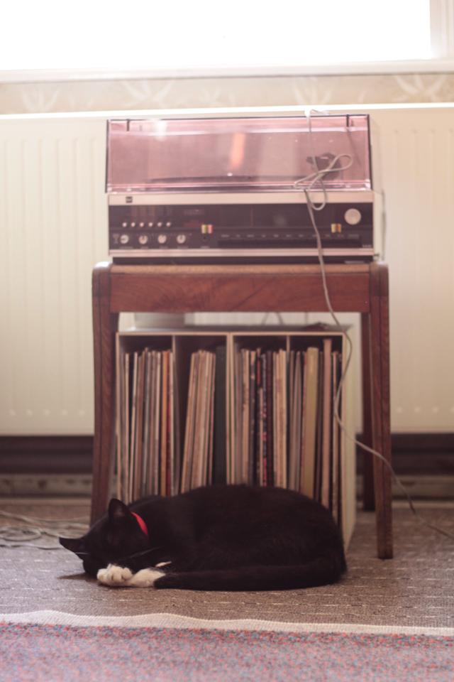 Katze schläft vorm Plattenspieler