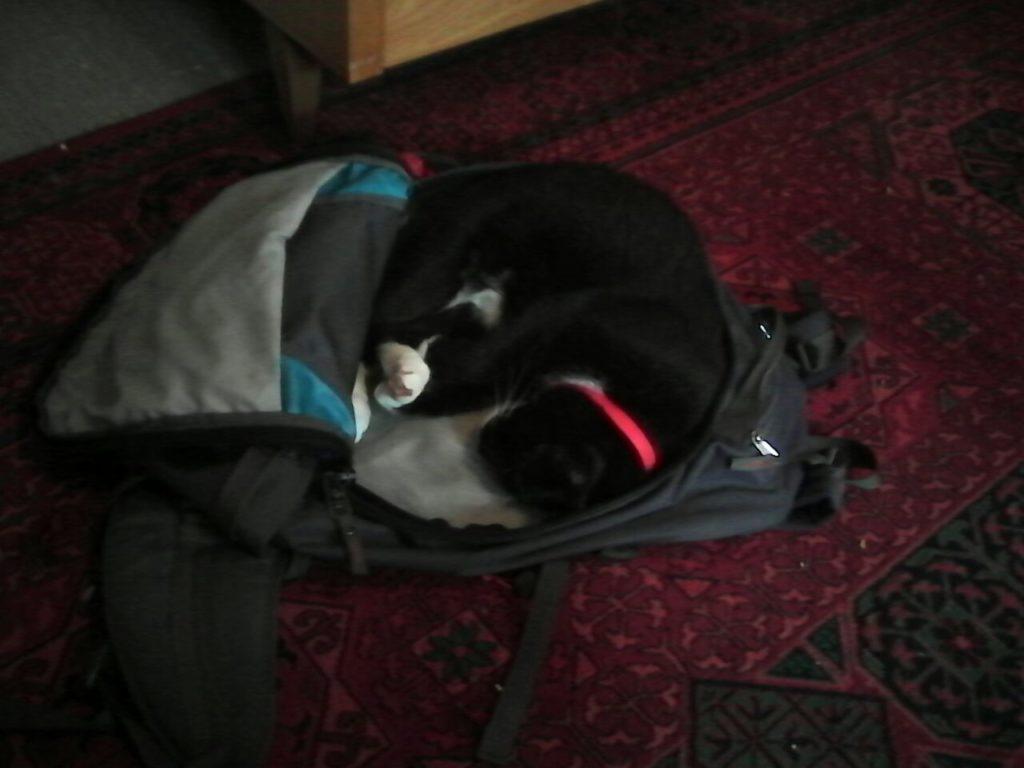 Auf dem Fußboden liegt ein offener Rucksack. Darin hat die Katze es sich gemütlich gemacht, sich zusammengerollt und schläft.