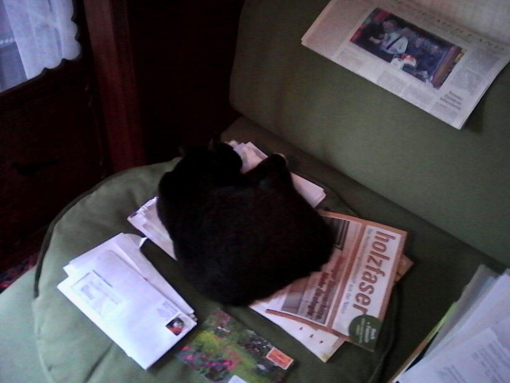 Diesmal hat die Katze sich es auf herumliegenden Papieren gemütlich gemacht.