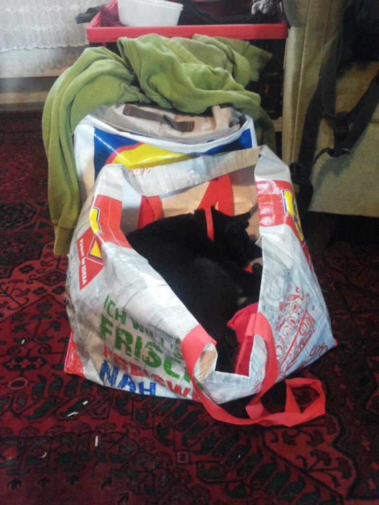Eine große Einkaufstüte mit Papierstapeln darin. Muss wohl sehr bequem sein, als Katze.