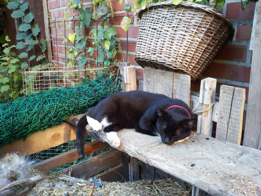 Über dem Kompost liegt ein Holzbrett, auf dem die Katze eingeschlafen ist.