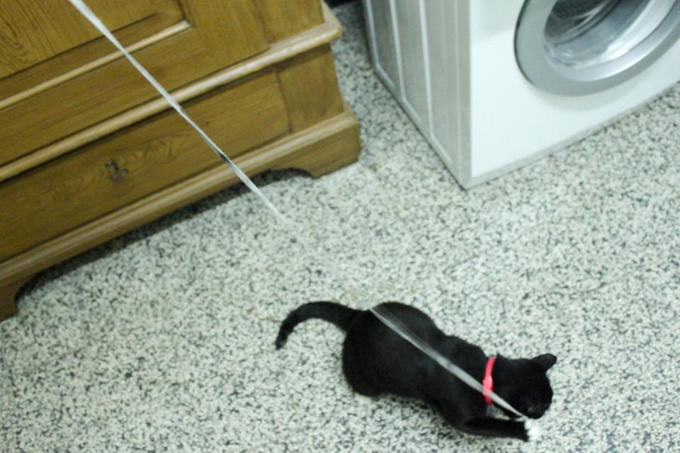 Piri spielt mit einem Schnürsenkel in der Waschküche