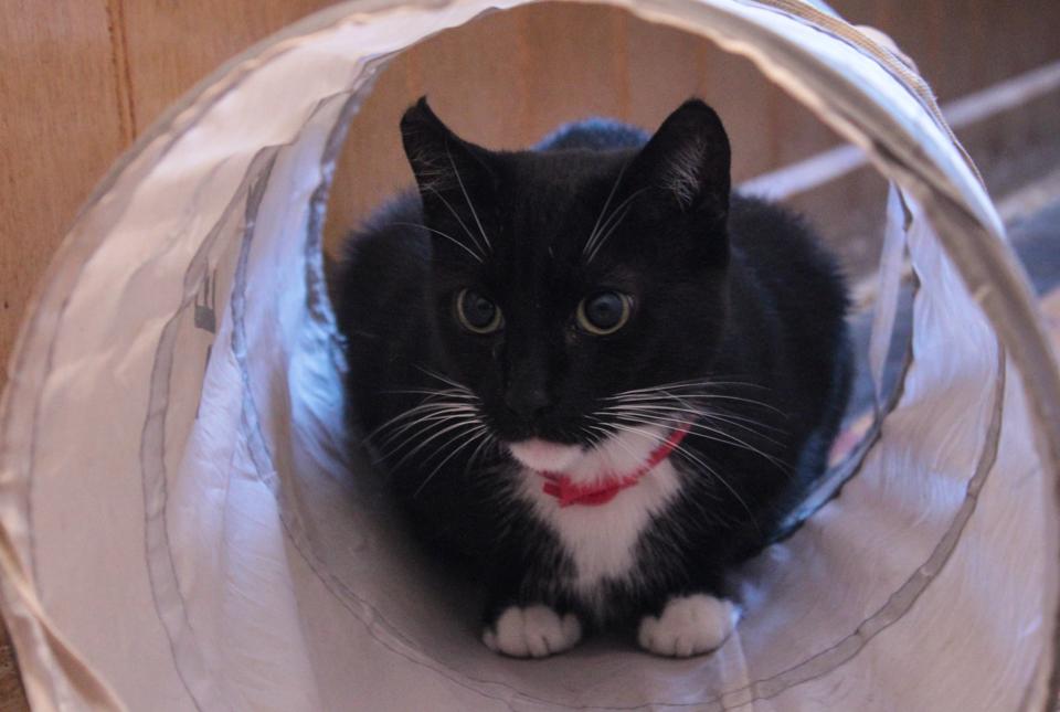 Piri sitzt in ihrem Katzentunnel