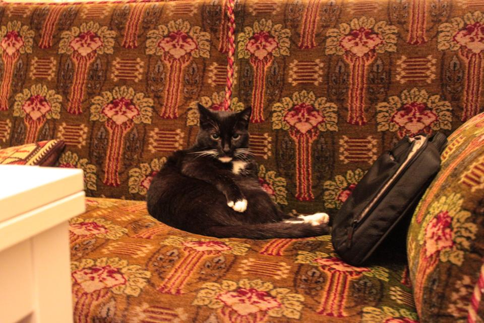 Piri hängt auf dem Sofa ab