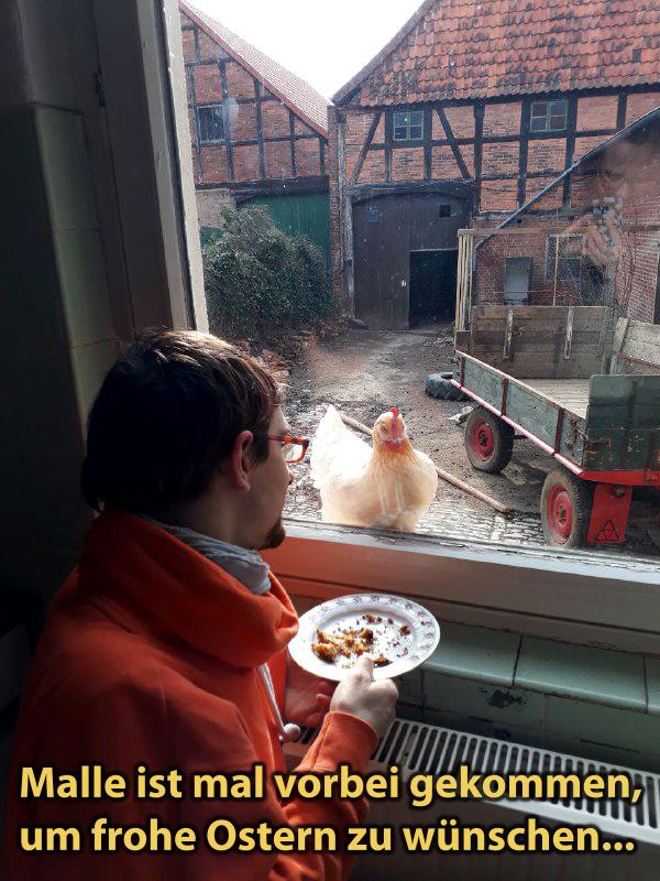 Das Huhn Mallorca starrt durchs Fenster in die Küche
