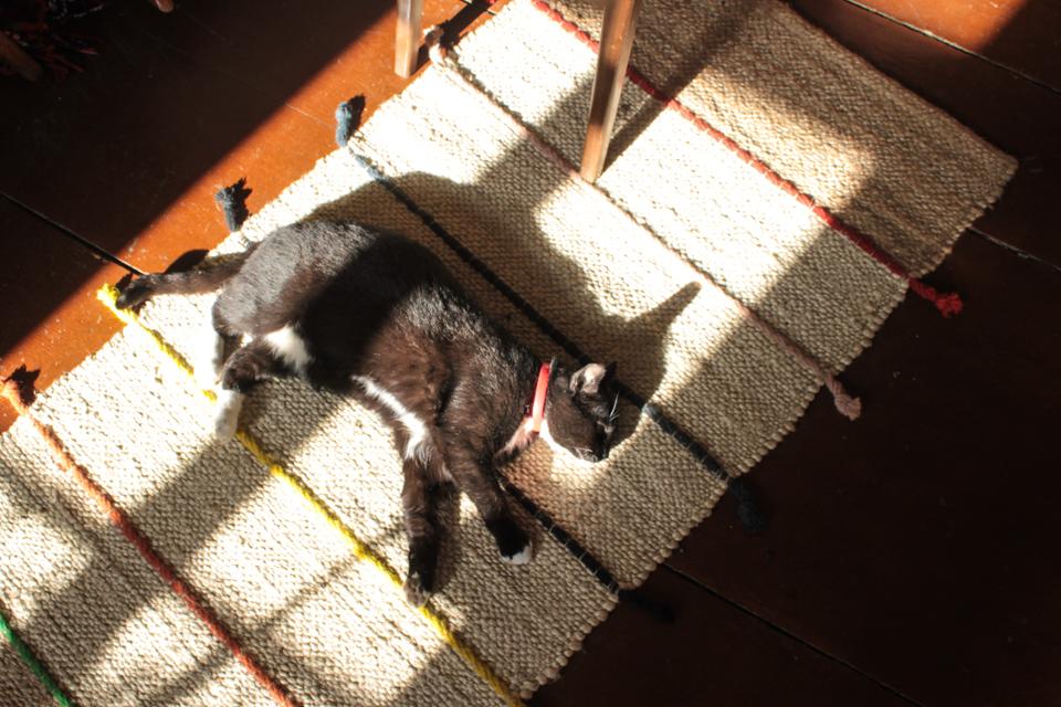 Piri liegt in einem Lichtfleck auf dem Teppich