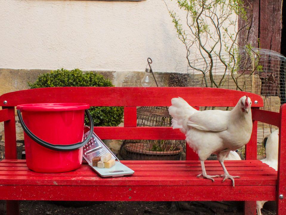 Huhn und Seifeneimer