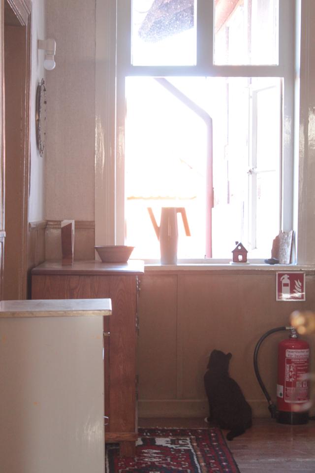 Piri sitzt unter dem Fenster im ersten Stock und belauert die Dachrinne