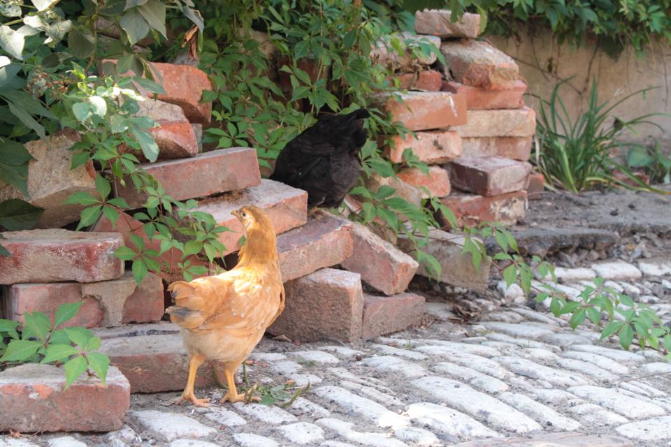 Ein hellbraunes und ein schwarzes Küken klettern auf Ziegelsteinen