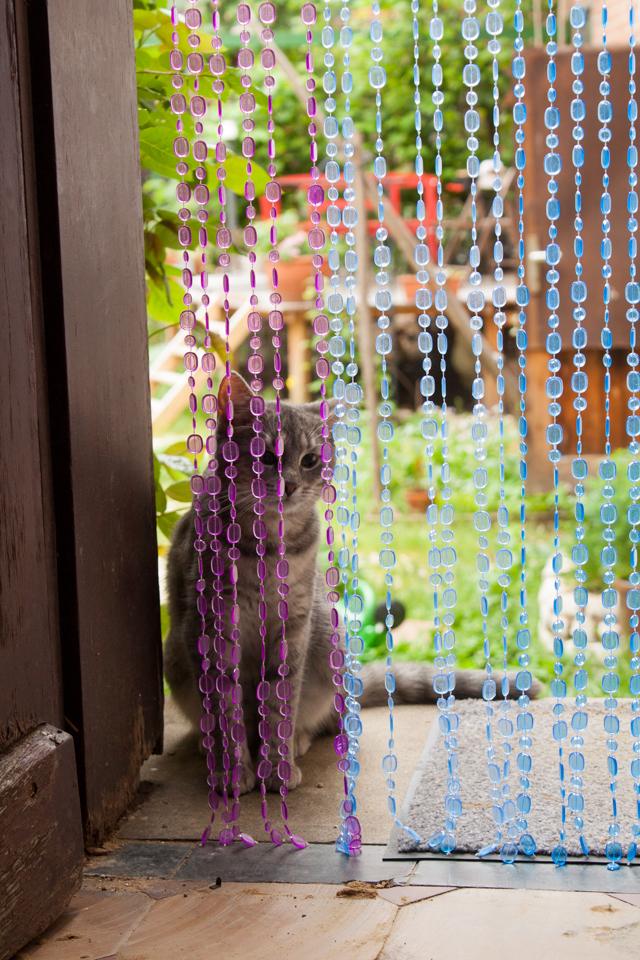 Eine kleine, grau getigerte Katze sind hinter einem bunten Perlenvorhang.